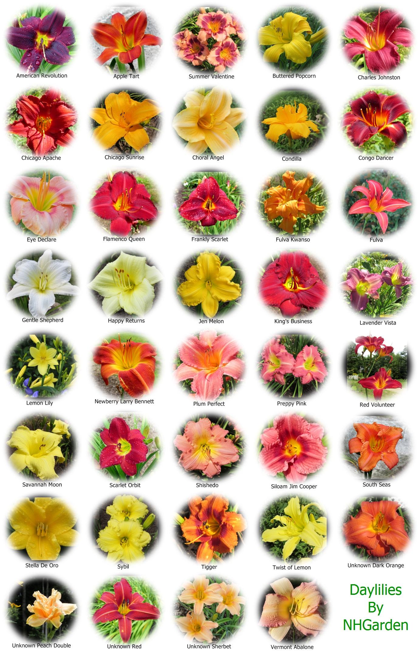 Flower Name Chart Flower Name Chart
